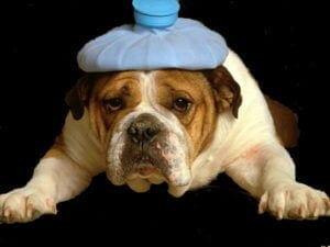 головные боли, мигрени