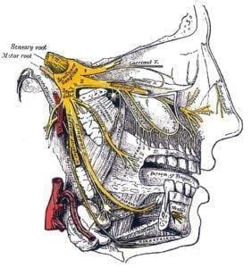Nevralgija-trojnichnogo-nerva