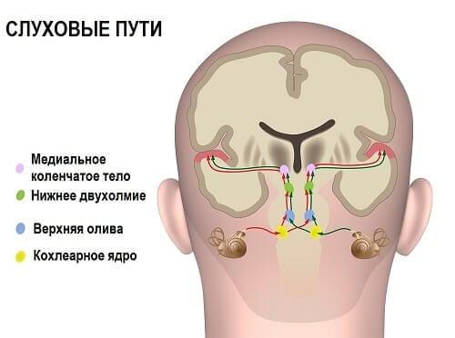 Схема узлов слухового анализатора