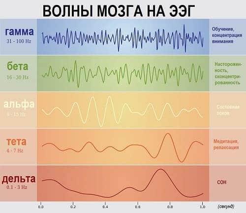 Ритмы нормальной ЭЭГ у взрослого