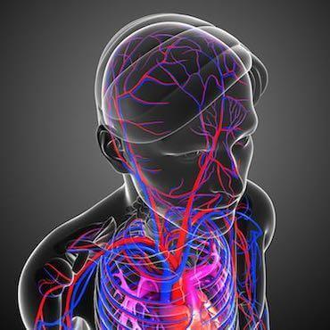 вены мозга, венозный инсульт, венозные дисфункции мозга