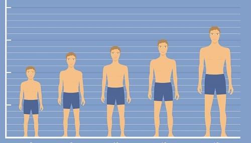 Рост человека от ребенка до подростка