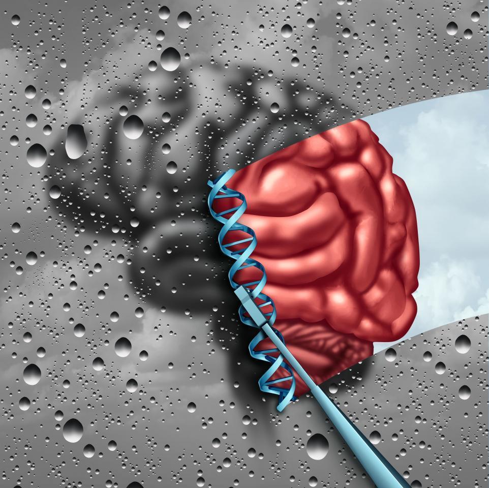 геном мозга