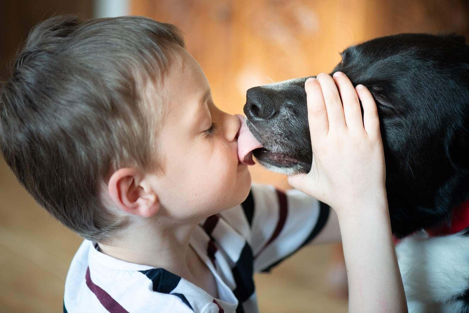 теплые отношения с животными