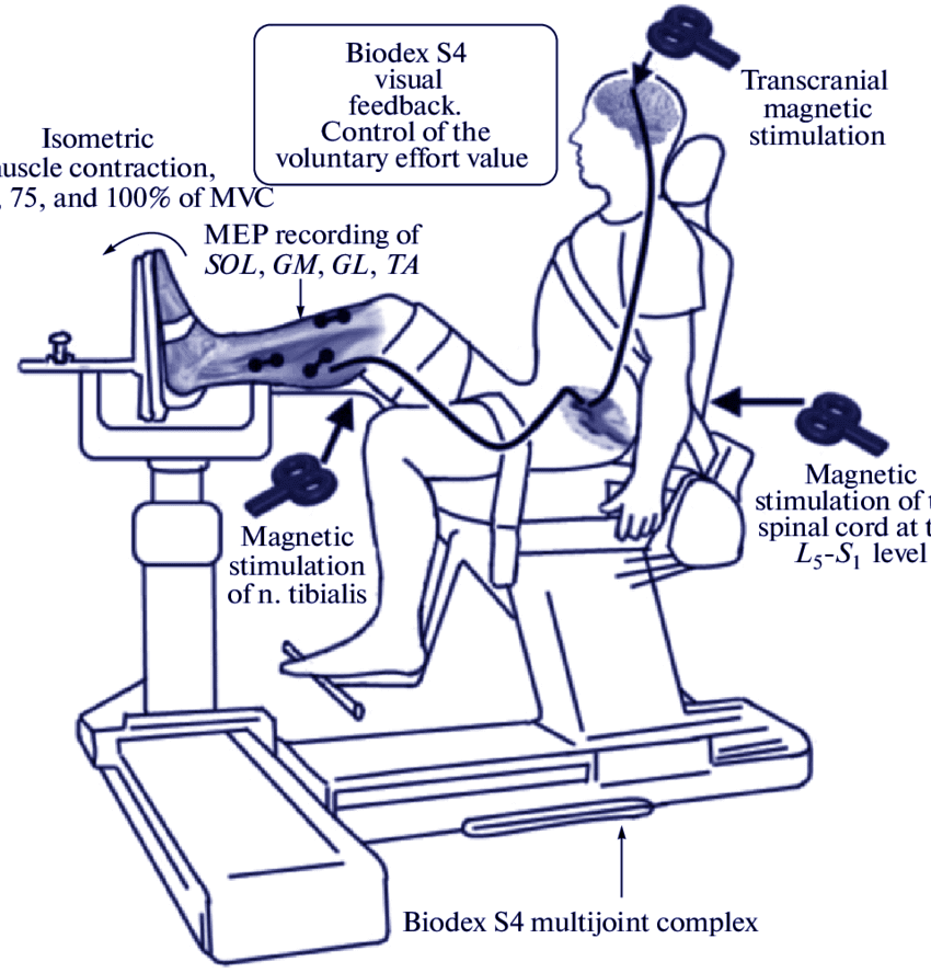 Фасилитация ответов при ТМС - схема воздействия стимуляции на тело человека