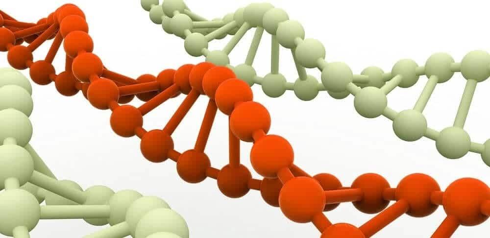 ДНК – носитель наследственной информации