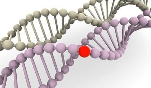 Наследственная эпилепсия в одном участке ДНК