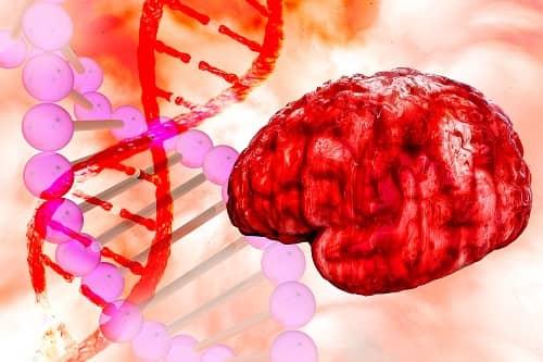 Патология мозга заложена в генах