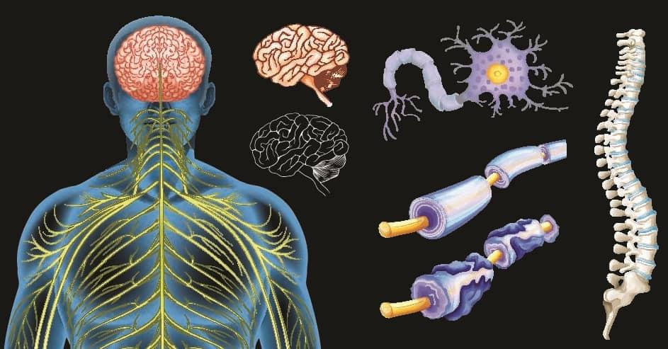 Точки приложения при рассеянном склерозе