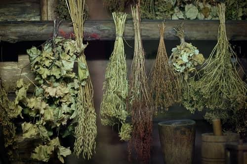 Заготовленные лекарственные травы