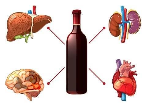 Алкоголь вреден для мозга, печени, сердца и почек