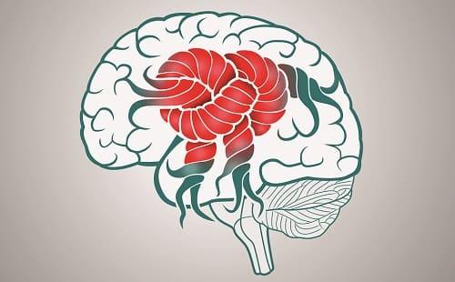 Структуры мозга тесно связаны между собой
