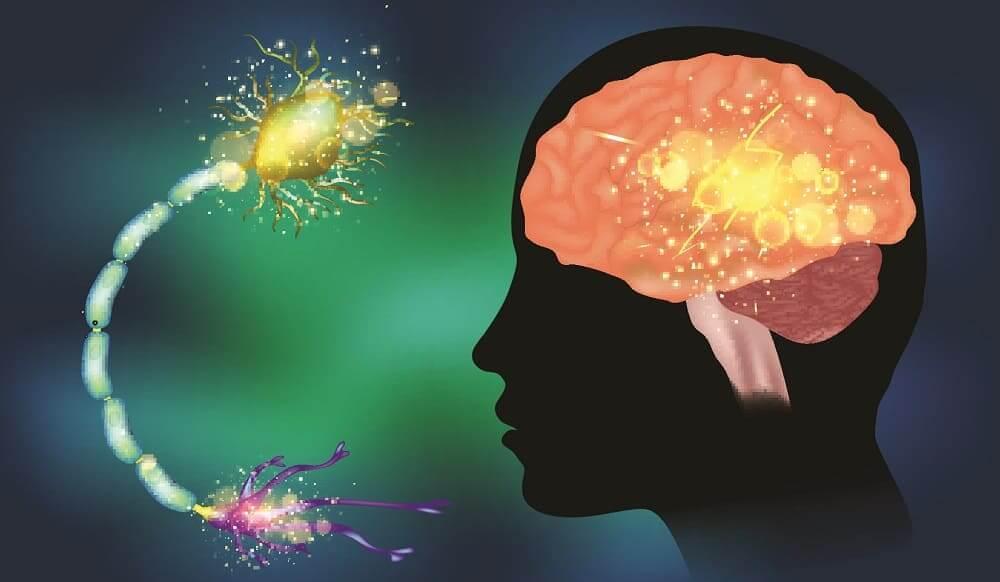 Криптогенная эпилепсия поражение нейронов мозга