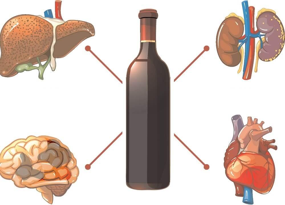 Алкоголь поражает почки, печень, мозг и сердце