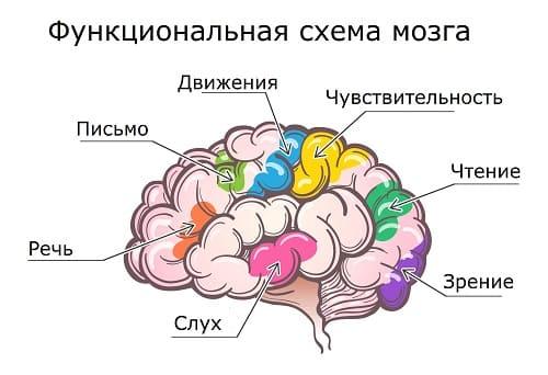 Функциональные зоны мозга