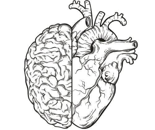 Концепт связи мозга и сердца