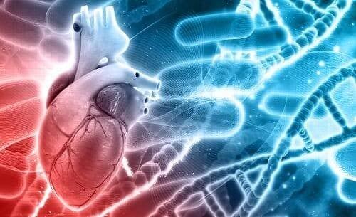 Сердце в окружении микробов и ДНК