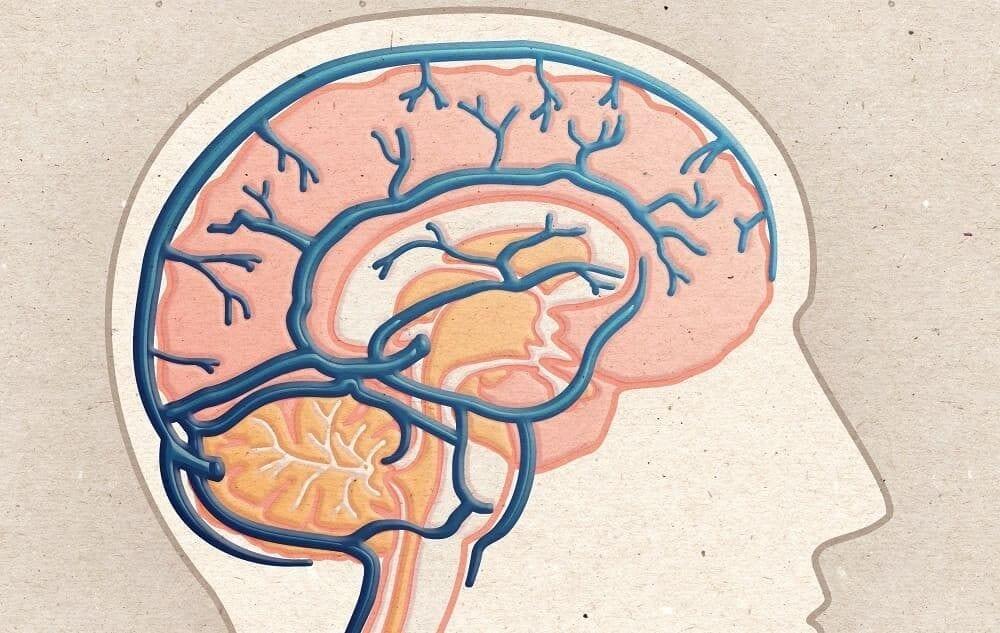 Схема строения венозной сети мозга