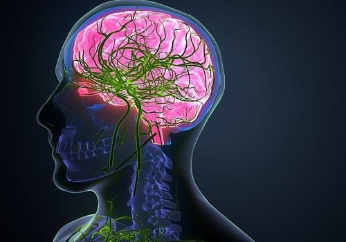 Сосудистая сеть питающая мозг