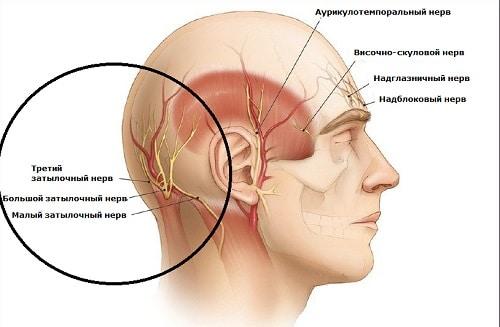 Анатомия затылочных нервов