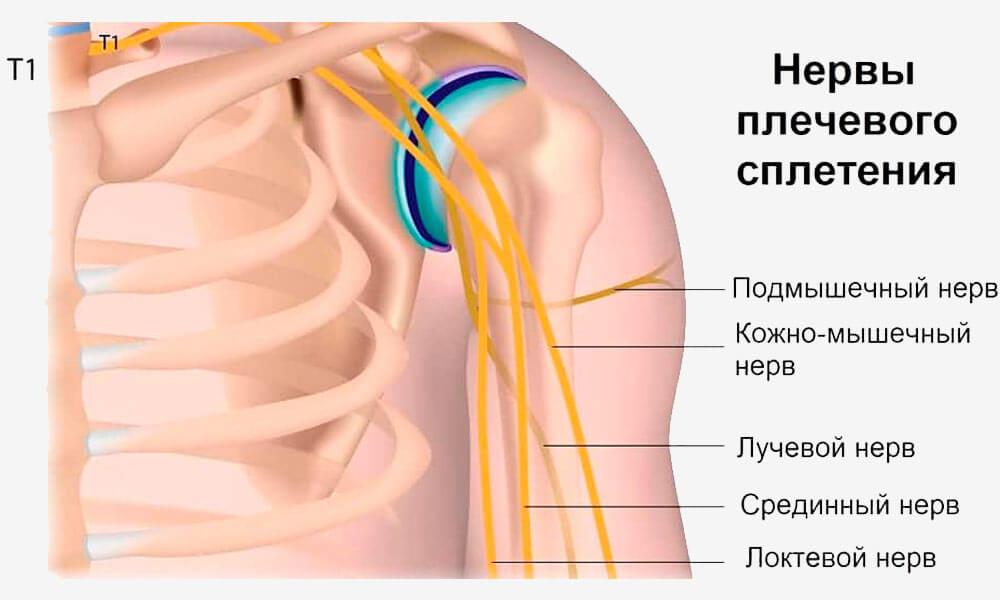 Строение и ход локтевого нерва
