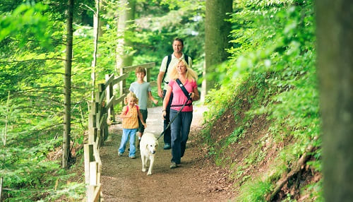 Прогулки в лесу